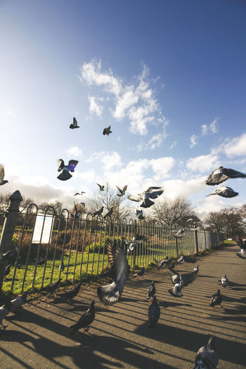 Spring came early this year Sky Sunlight City Tree Outdoors Bird Cloud - Sky Day Street Photography Europe Lithuanian Travel Photography Exploring Morning London Lifestyle Clapham Common Park