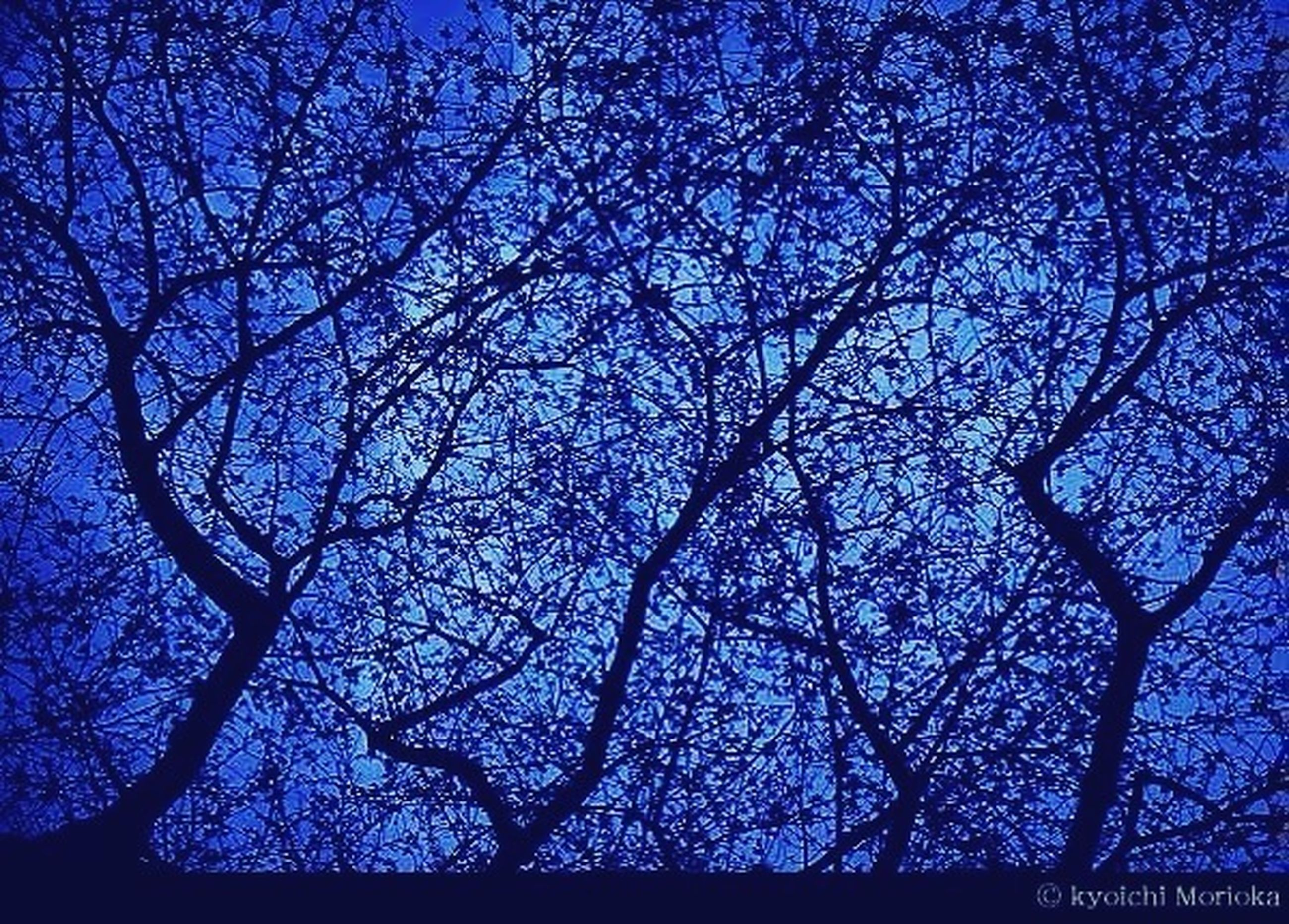 low angle view, tree, branch, bare tree, blue, silhouette, sky, nature, growth, beauty in nature, outdoors, tranquility, night, no people, clear sky, dusk, scenics, illuminated, sunlight