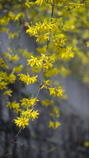 Plant Yellow