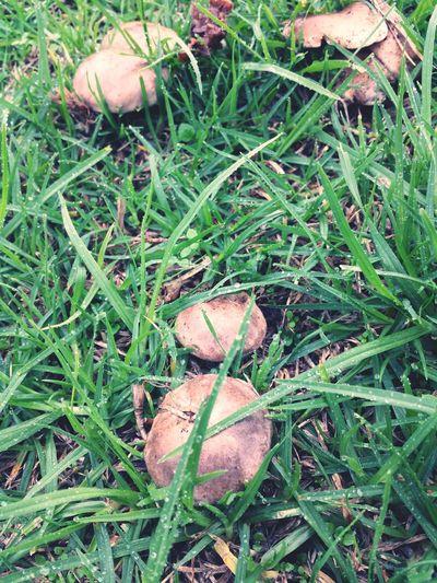 mushrooms pop up everywhere