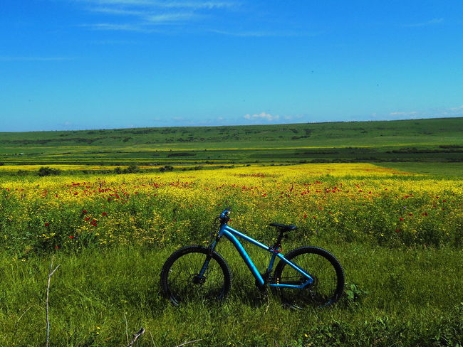 Ghost Beauty In Nature Bicycle Colors Georgia Mountain Relaxing Sky Trip Yellow Yellow Flower