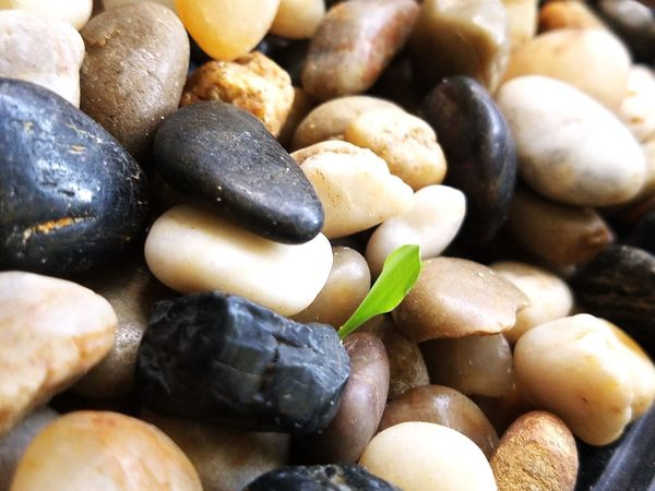 life persists Pebbles Tranquil Scene Small Rocks Colorful First Sprout Life Pushes Through Rocks Survival Winning Beating The Odds Overcoming City Full Frame Close-up