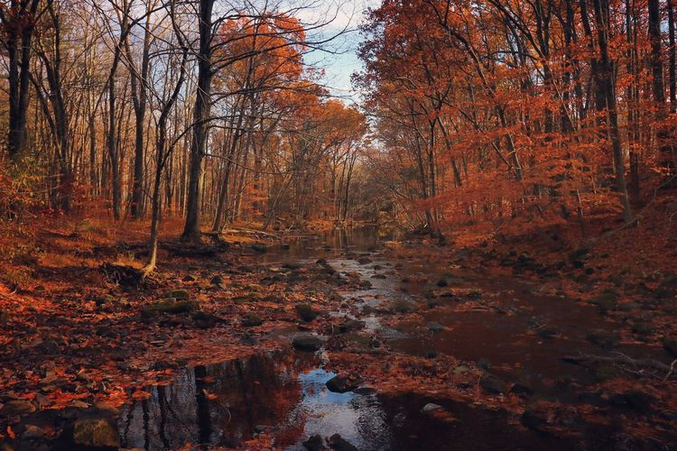 Stream amidst trees at forest during autumn