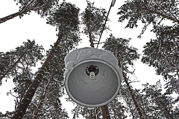 winter Snow Snow ❄ Russian Winter Saint Petersburg Sky фотопрогулкиспб HDR Vorobeva_yana Vorobeva_foto ятаквижу черезмойобьектив Saintpetersburg Tree Geometric Shape Leaves