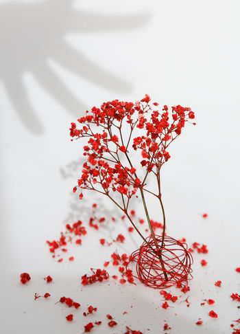 Abstractart ArtWork Being Creative Blooming Blossom Branch Elégance Flower Flower Head Fragility Freshness Growth In Bloom Magic Nature Organic Petal Poetry Red Shadow Springtime Stem Welcometomyworld Selfmade