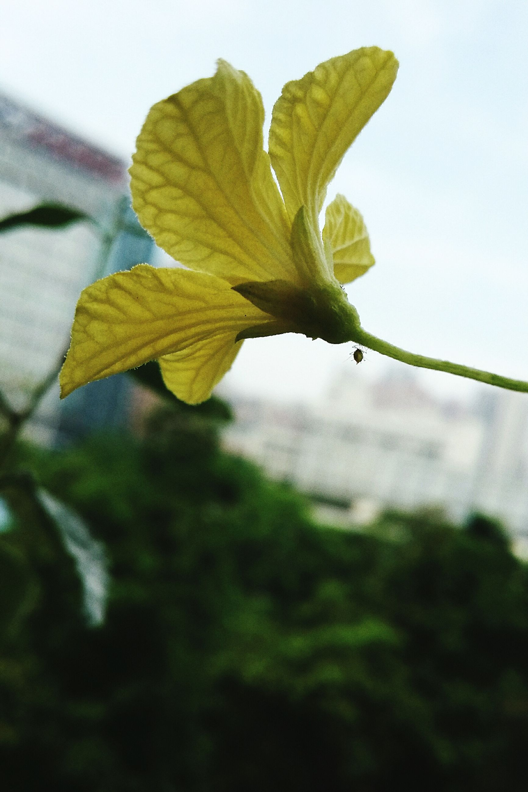 leaf, close-up, fragility, growth, focus on foreground, freshness, nature, beauty in nature, stem, season, flower, plant, leaf vein, sky, twig, day, wet, drop, outdoors, botany