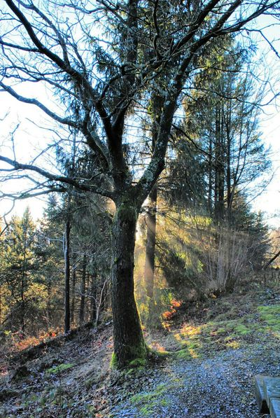 Eye4photography  Harz Nature_collection Trees