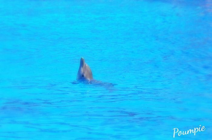 Dolphins Dauphin Pets Cute Pets