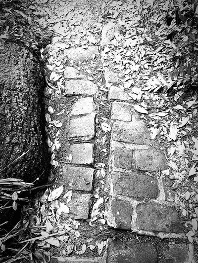 Walking Around Black & White Memorable on the way to the Fink Asylum Sidewalk Bricks Cobblestones