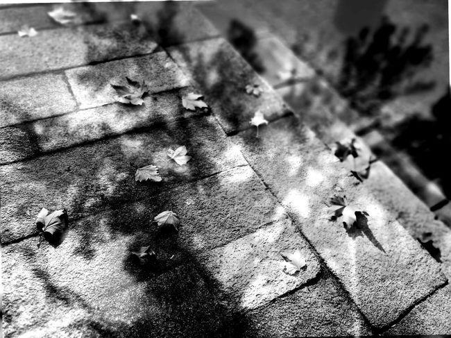 No People Huawei HuaweiP9 Chineseproverb Proverbiochino Hojas Hoja Leaves Leave Tree árbol Tranquility Tranquilidad Otoño Autumn Blackandwhite Black&white Tesis99 Onedaythreeautumns Undíatresotoños Floor Street Calle Suelo Herbst Black And White Friday