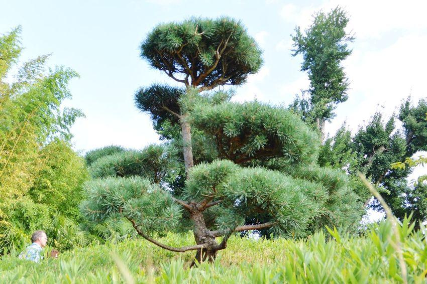 Suite de la promenade dans le jardin d'inspiration asiatique Asian Garden Cloud Tree Zen La Bambouseraie Anduze Holiday Memories South France
