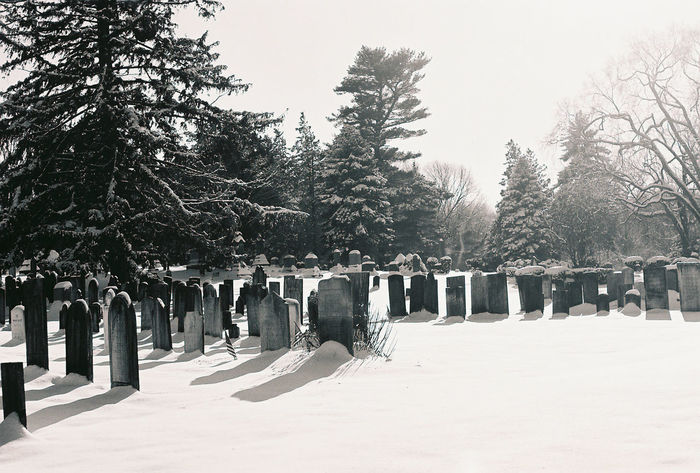 B & W Photography Black & White Black & White Photography Black And White Photography Cemetary Cemetary Photography Cemetary Spooky Cemetery Cemetery In The Snow Cemetery Photography Graveyard Graveyard Beauty Graveyard Photography Graveyard Photos Headstone Headstone Slabs Decades Old Headstones Headstones In A Row