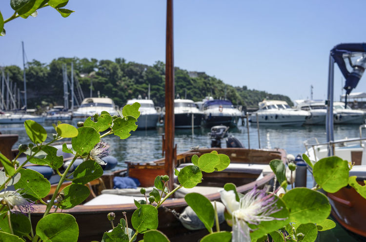 Caper Marina Caper Flower Floating On Water Flower Flowering Plant Focus On Foreground Freshness Growth Islandlife Leaf Mode Of Transportation Nature Nautical Vessel No People Plant Plant Part Procida Sailboat Sky Water