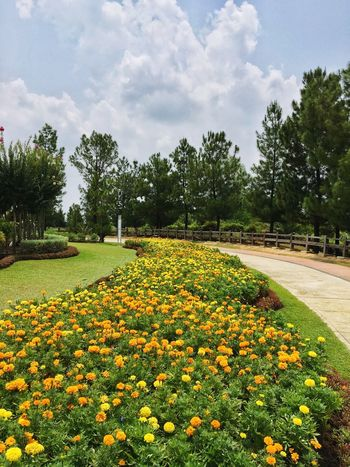 taman saujana hijau Park Garden Flower Garden Clear Sky Summer Day Yellow Flower Taman Saujana Hijau Flower Growth Nature Beauty In Nature Tree Yellow Plant Fragility Petal Blooming Freshness Cloud - Sky Outdoors Flowerbed Blossom Day No People Field Sky Tranquility