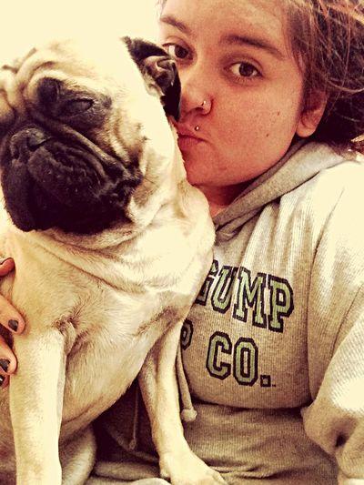 Pug Love Pug Life ❤ Pug Life  Ilovepugs Pug Pug Chile Pequeño Frank