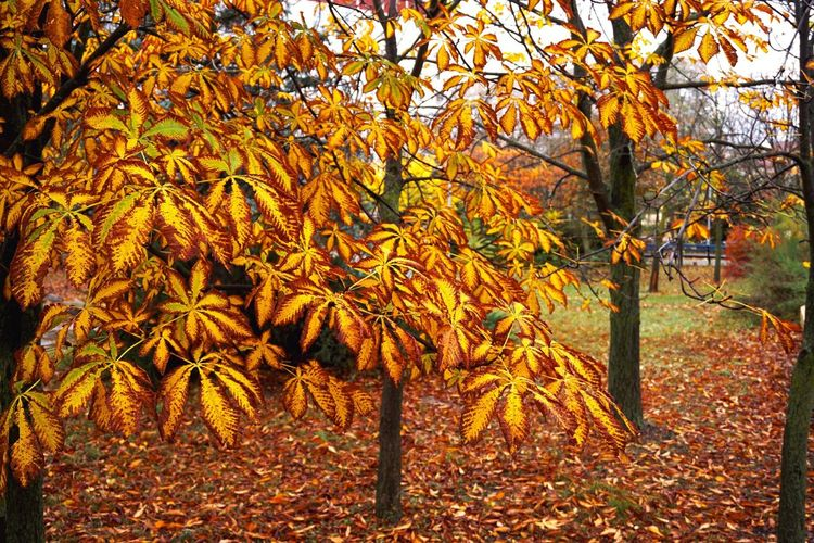 Close-up of autumn tree in forest