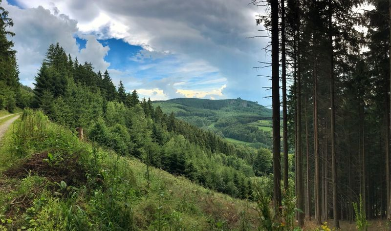 View Forest Tree Nature Landscape No People Mountain Cloud Bruchhauser Steine Rothaarsteig Panorama Tour Walking Path Way Trekking Point Of View Wood Green The Great Outdoors - 2018 EyeEm Awards