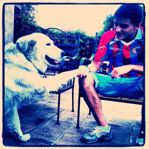 Catania Calciocatania Dog