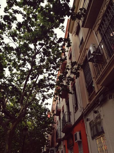 Tree Low Angle View Architecture Built Structure Building Exterior Day Hanging No People Growth Branch Outdoors City Sky City Life Neighborhood Patraix València Valencia Street Valencia Landscapes Valenciagram