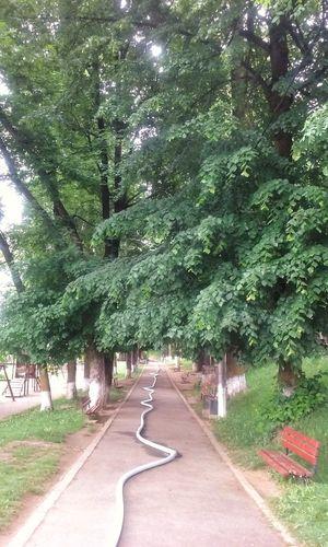 Cardiogram Nature Heart Beat Tree Road Green Color Sky