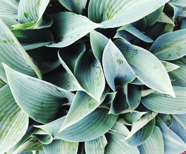 Full frame shot of flowering plant leaves