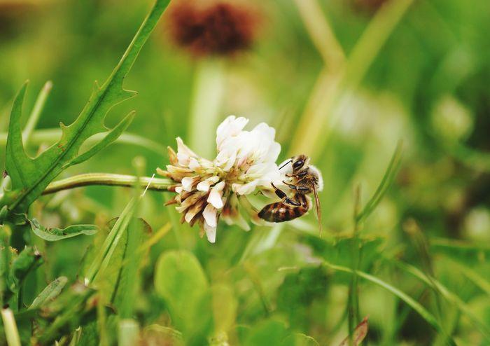 Bee Flower Beeandflower Close-up Makro EyeEmNewHere EyeEmNewHere