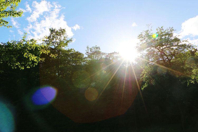 Wonderful Day Nationalpark Blinaja Sunny Day