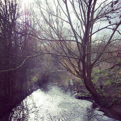The River Crane