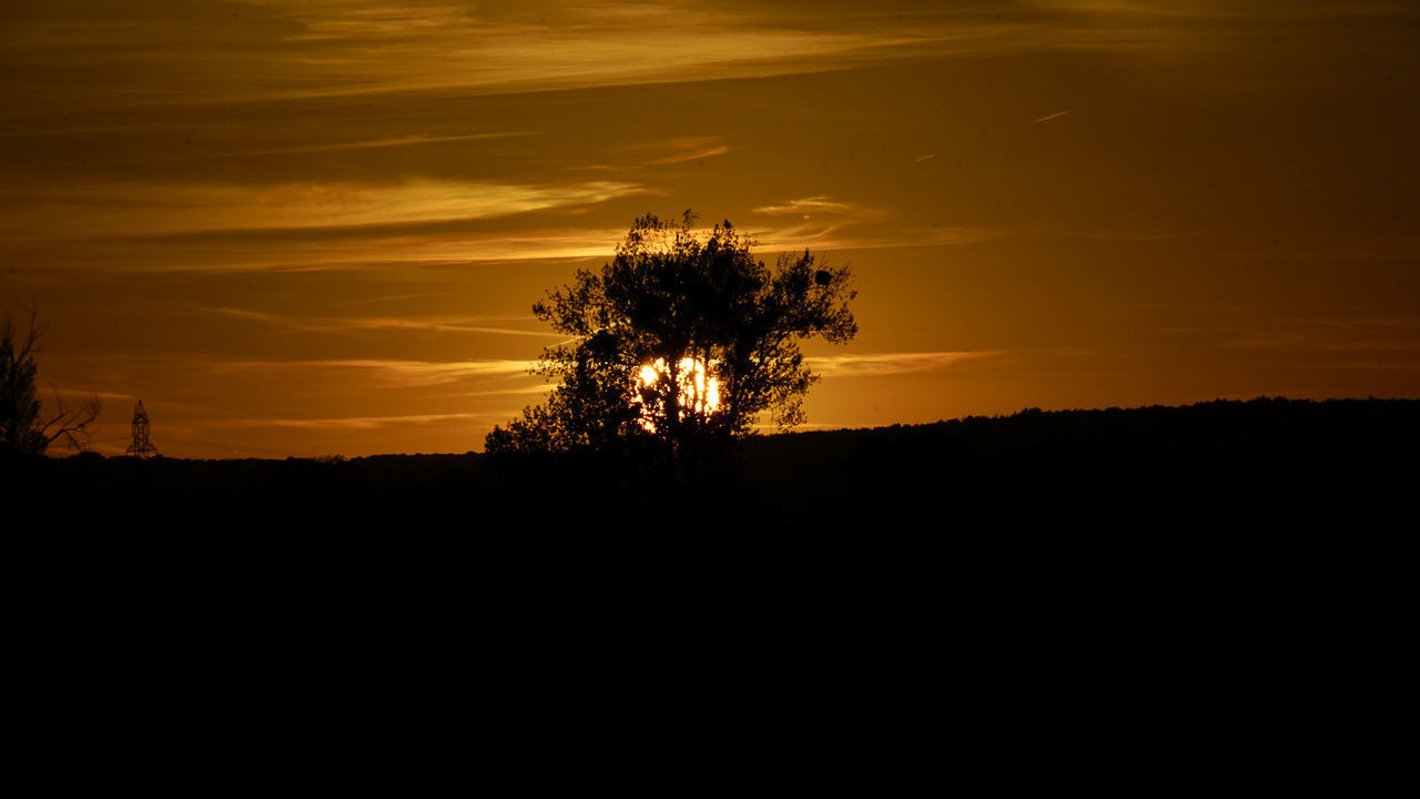 SILHOUETTE TREES AGAINST SKY DURING SUNSET