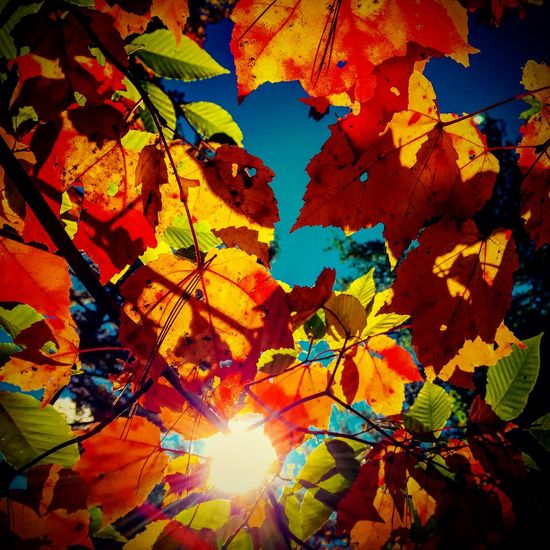 Fallinnewengland Leaves Lovethistimeofyear Color Contemplativephotography Noticedwhilewandering Gratitude IPSPerspective IPS2015Fall