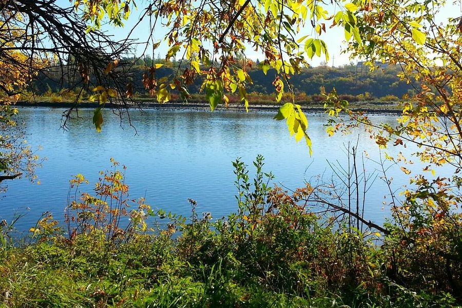 Fall Season South Saskatchewan River Landscape #Nature #photography Autumn 2015 Autumn Collection Fall Beauty Fall Colors Autumn Trees Autumn Colors Autumn🍁🍁🍁 EyeEm Best Shots - Autumn / Fall Nature Photography