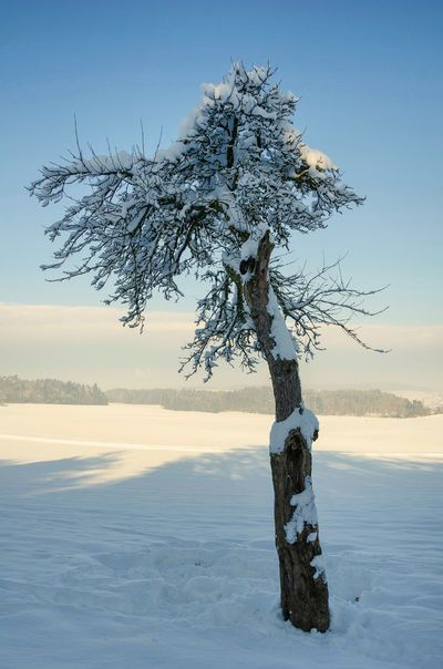 Frozen Bare Tree Beauty In Nature Cold Cold Temperature Evening Landscape Light And Shadow Nature Outdoors Scenics Sky Snow Tranquility Tree Tree Trunk Winter