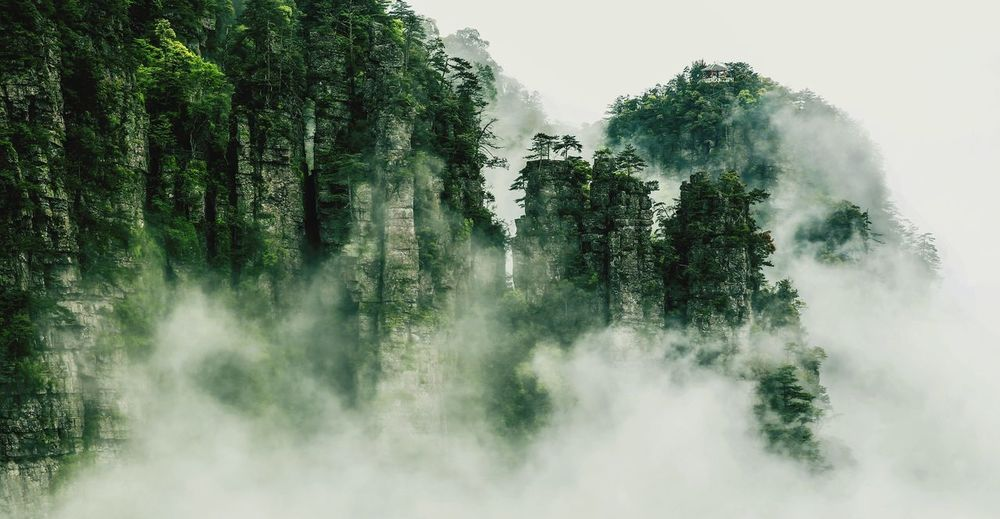 Low angle view of trees on foggy day