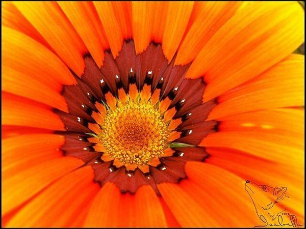 цветок  оранжевый яркость Природа фауна цвет лепестки пыльца EyeEmRussianTeam