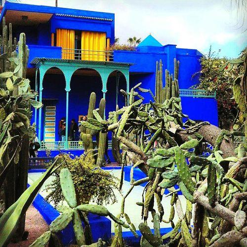 Lejardinmajorelle Bluemajorelle Cactus Garden Paradise Marrakech Architecture Built Structure