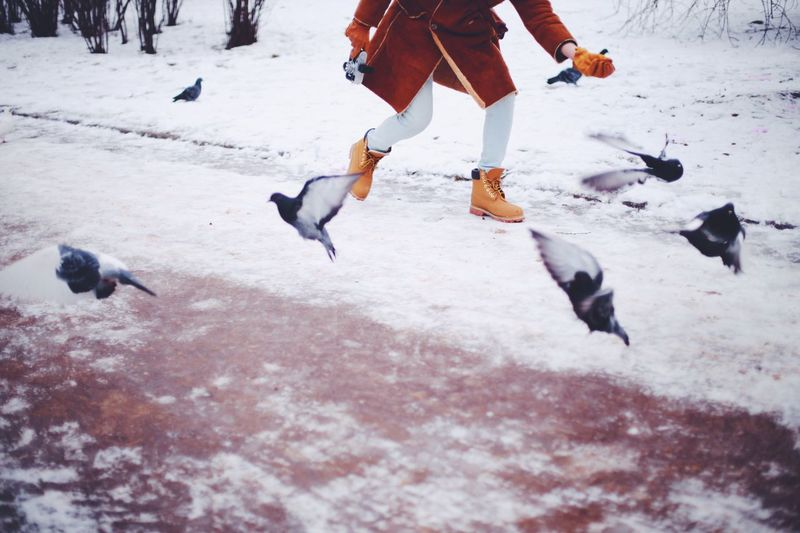 Feeding pigeons Pigeons Flying Snow Snapshots Of Life Moment The Great Outdoors Done That. Shades Of Winter