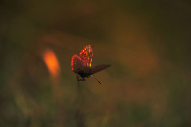 Motyl Red Photo
