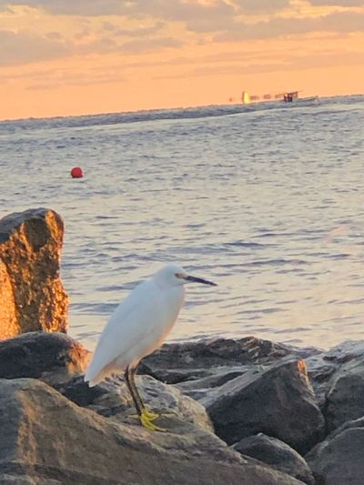 Seagull perching on rock by sea against sky