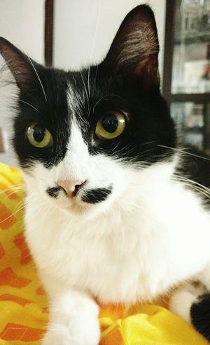 Cat Lovers Cats Gato Gatosfelizes Chat Pet Photography  Pet