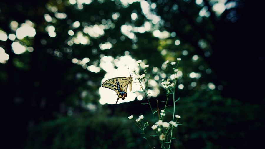 Butterfly - Insect No People Nature Outdoors Insect Animals In The Wild Focus On Foreground One Animal Animal Themes Day Close-up Beauty In Nature EyeEm Selects EyeEmNewHere
