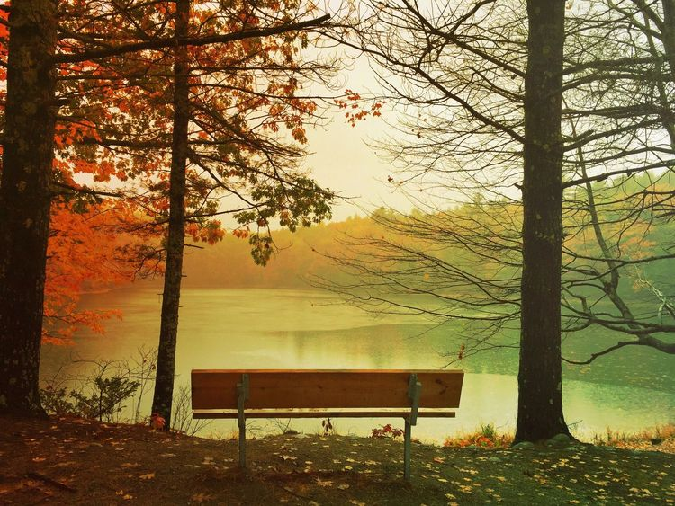 ALL ALONE Tree Beauty In Nature Nature Tranquil Scene Landscape No People Scenics Outdoors ClayHaynerPhoto Travel Photography Clay Hayner Photo Travel Destinations Fall Autumn Lake Maine Traveling Travel Photography Photo Of The Day Art Tranquility Hiking Photooftheday Autumn