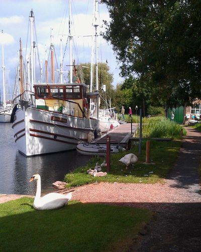 Nautical Vessel Water Outdoors Moored Day Nature Swans Cygnets