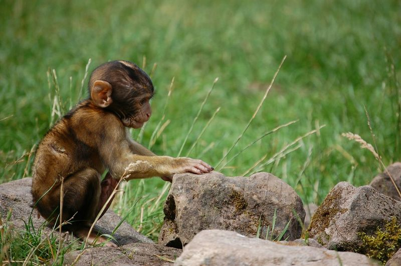 High Angle View Of Infant Monkey Sitting On Rock