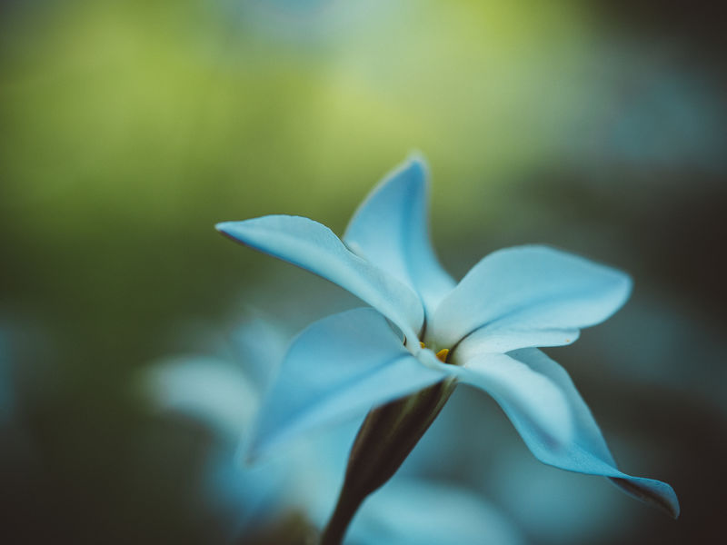 Flower Portrait Beautiful Nature Flower Painting Marierichphotography Olympus Art Artistic Photo Beauty In Nature Blooming Close Up Close-up Day Floral Photography Flower Flower Head Fragility Frangipani Freshness Growth Macro Nature No People Outdoors Petal