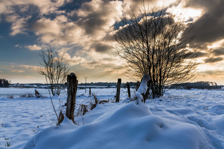 Bare Tree Beauty In Nature Cold Temperature Day Field Frozen Landscape Nature No People Outdoors Scenics Sky Snow Tranquil Scene Tranquility Tree Water Weather Winter
