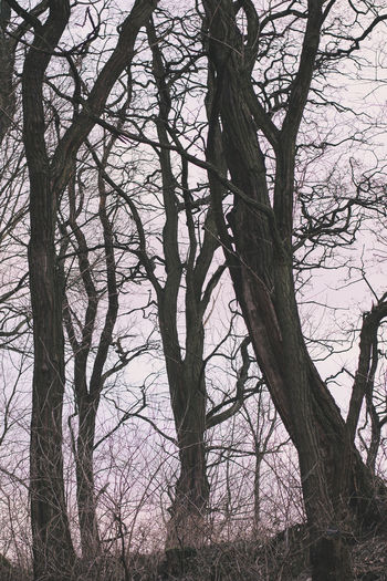 trees Tree Branch Bare Tree Trunk Tree Trunk Plant Nature Tranquility No People Sky Day Land Outdoors Growth Forest Beauty In Nature Scenics - Nature Creepy