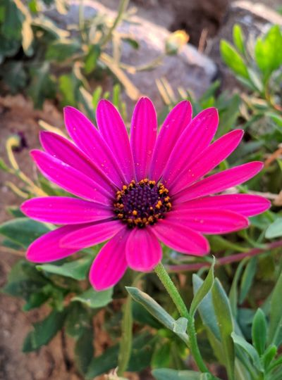 High angle view of pink flower
