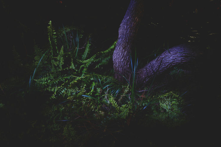 Moon Nights Sydney Grass Green Color MoonNights Nightphotography Tranquility Tree Trunk Beauty In Nature Botanical Contrasting Colors Dark Beauty Darkness And Light Fern Growth Haunting  Lightpaint Longtimeexposure Mysterious Nature Night Nightscape Pond Life Purple