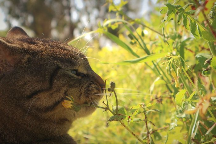 Animals In The Wild Nature Outdoors Animal Themes No People Day Close-up Mammal Cat Miki Canon M10 Malta Gozo Pet Portraits