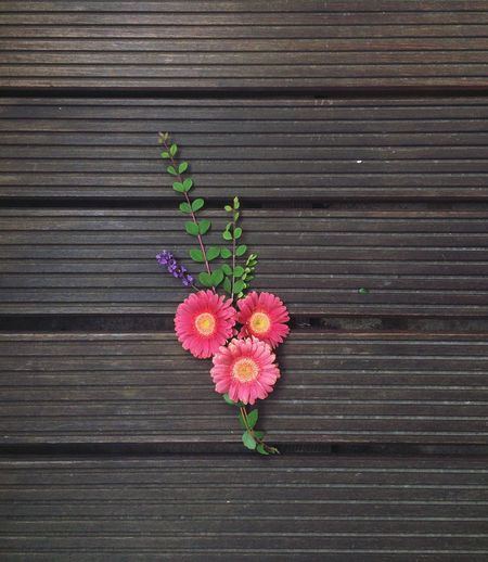 Close-up of pink flowers against wooden wall